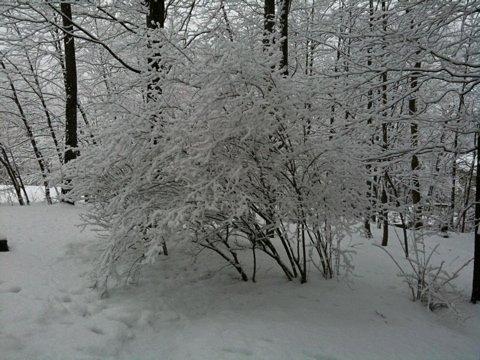 Blizzard (Winter Tree)