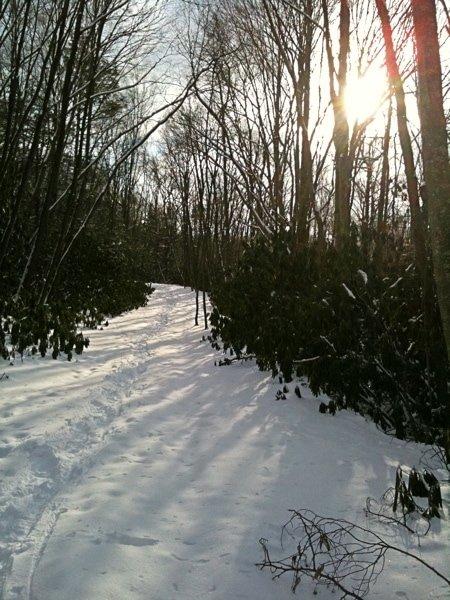 Winter Glint