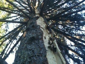 Nature's Power: The Lightning Tree 4