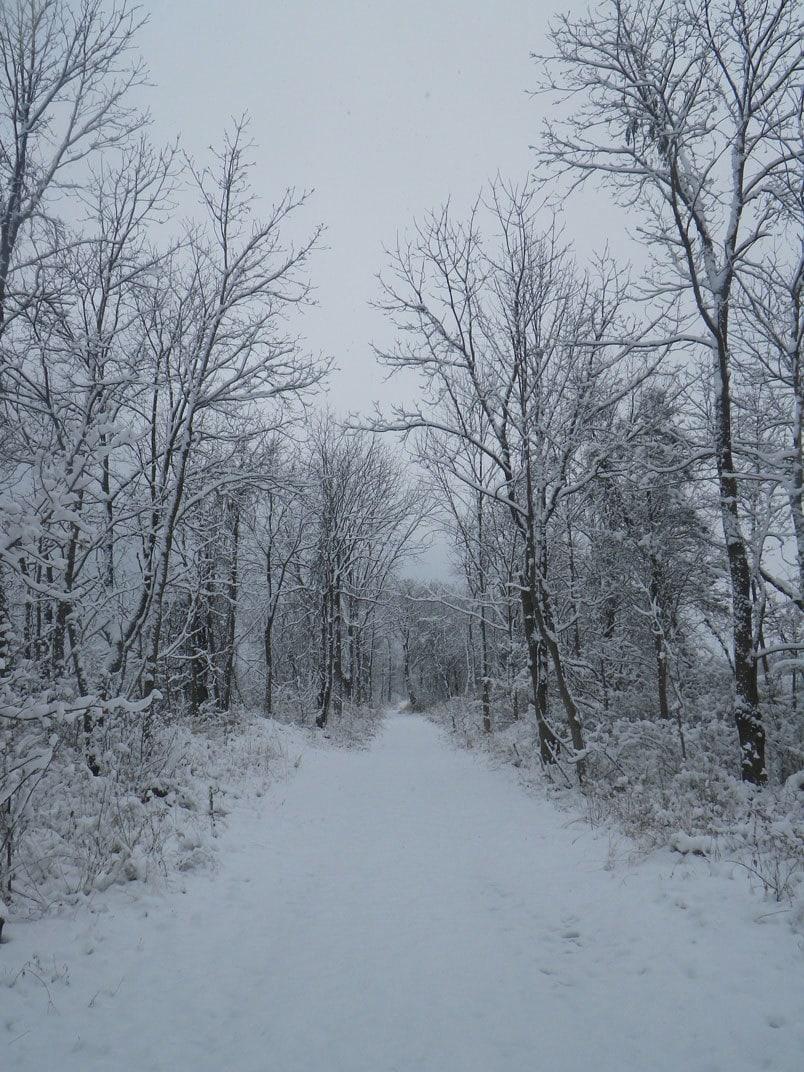 Winter Path (Just Quit)