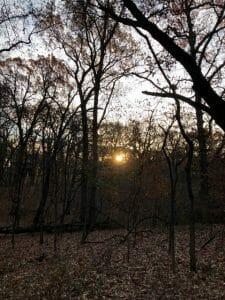 Better Woods