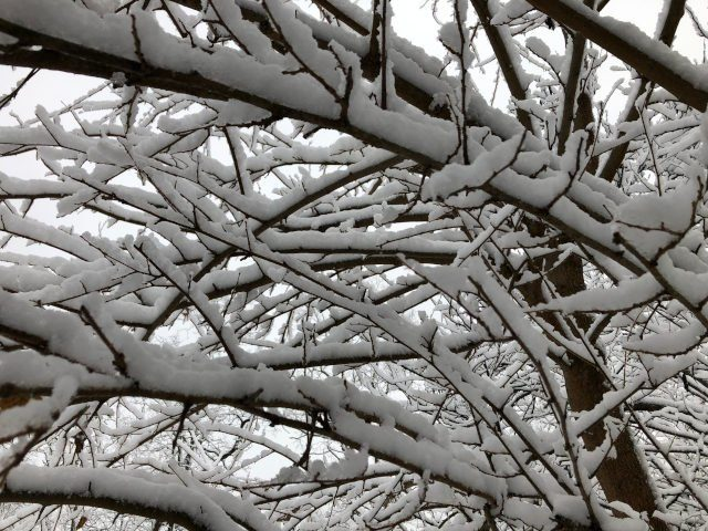Snowy morning branches no.1