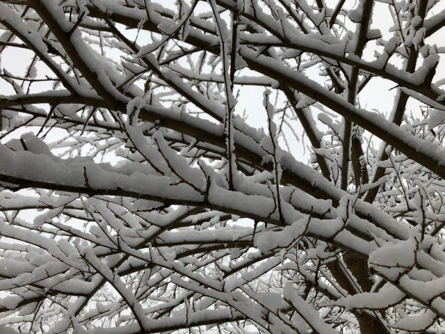 Snowy morning branches no.2