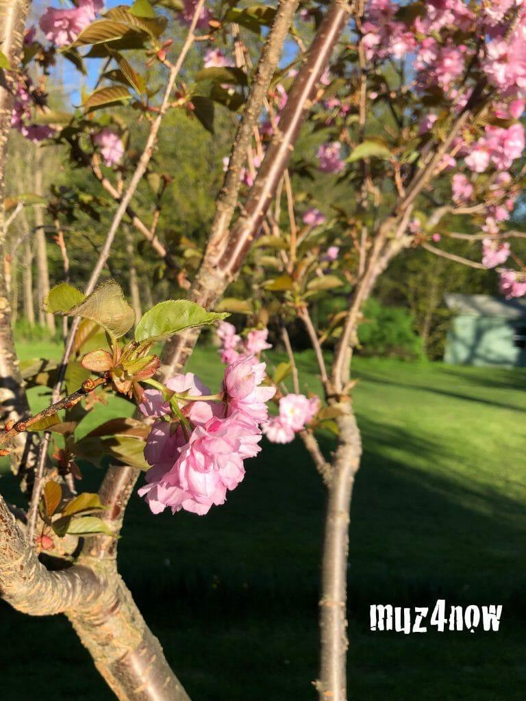 Grown & Change blog