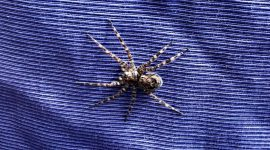 What scares you? - spider on blanket