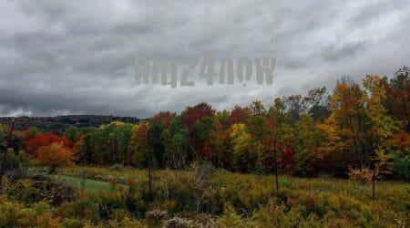 Treman autumn scene