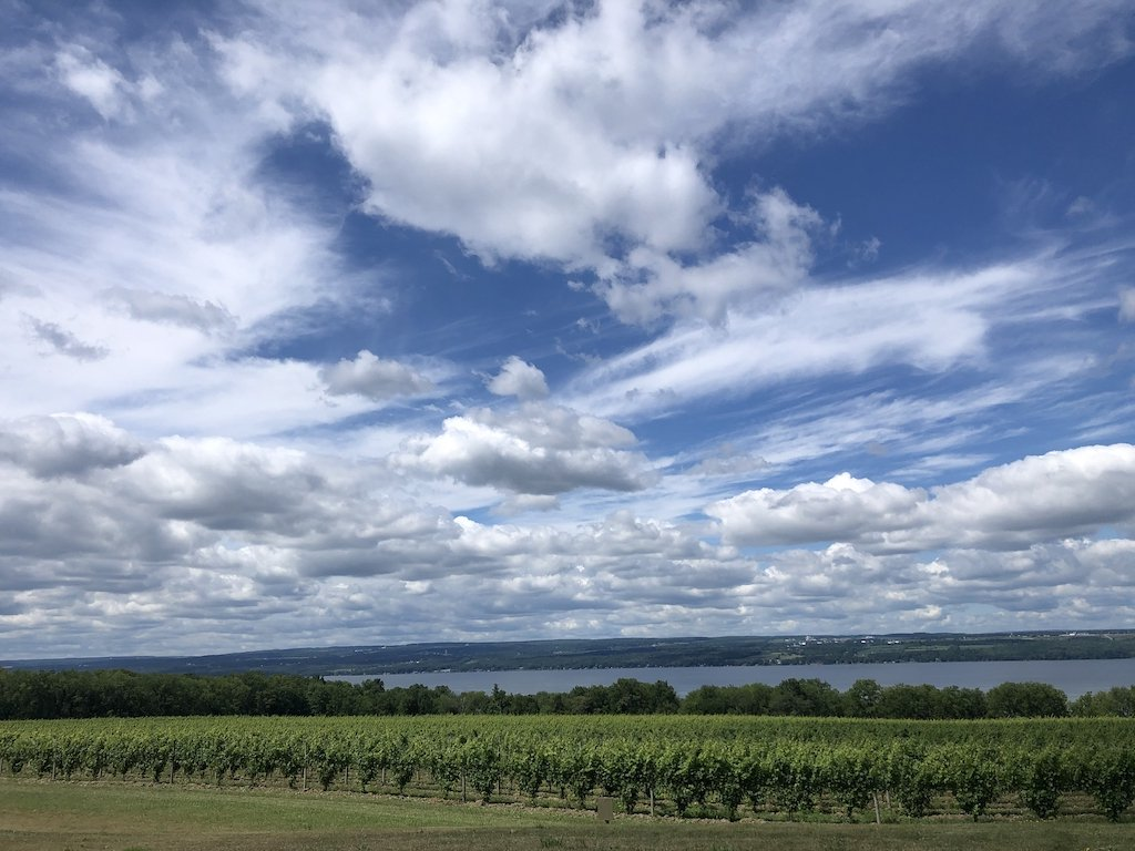 Seneca Lake vineyard