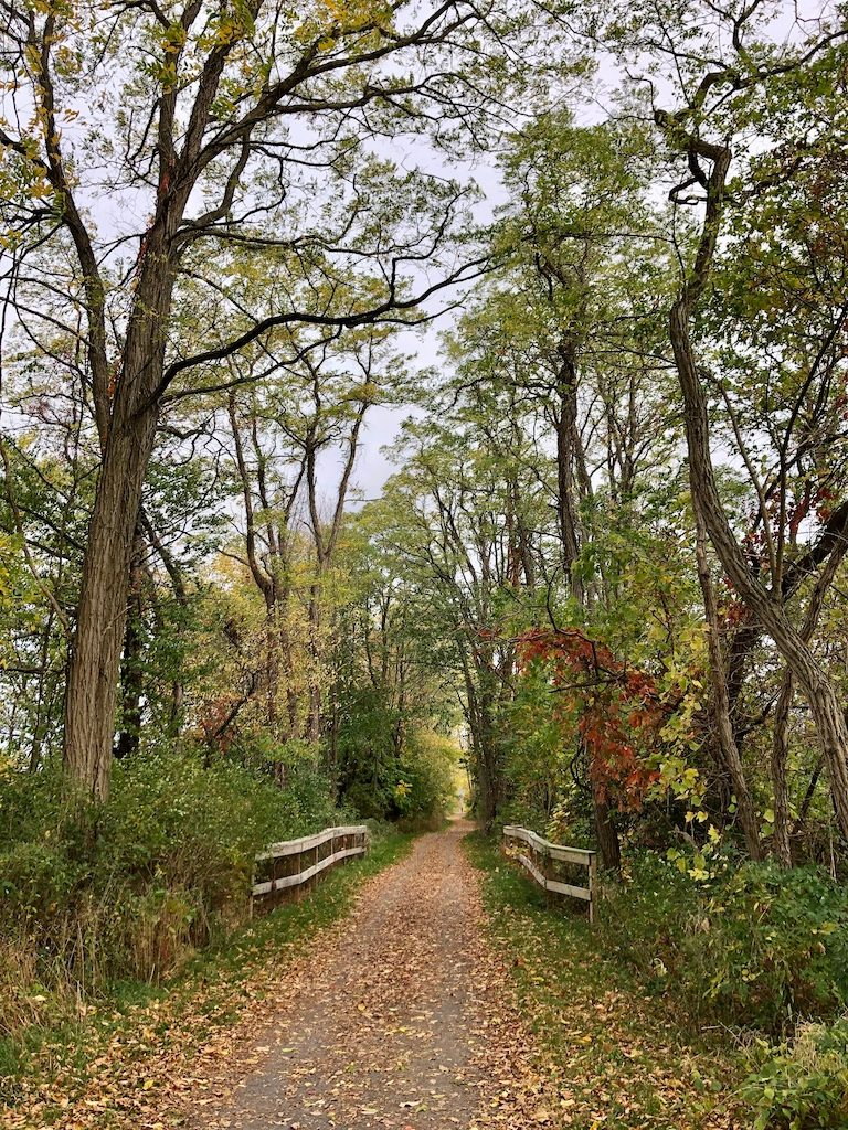 Finding our way - autumn trail