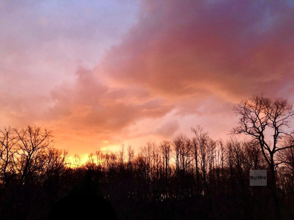 Sunrise above trees - convergence