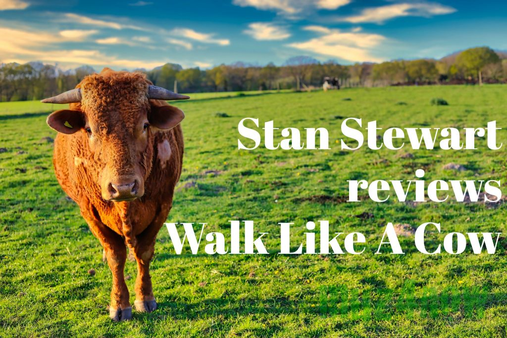 """A cow in a field with the title, """"Stan Stewart reviews Walk Like A Cow"""""""