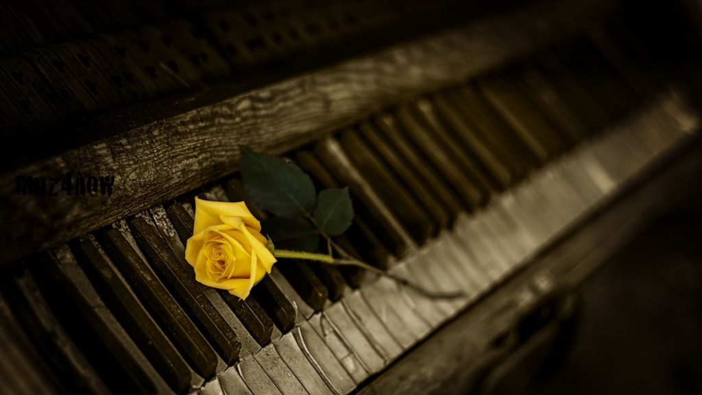 A yellow rose plus stem lying on a piano keyboard that has many keys coming apart
