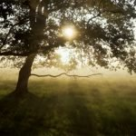 Opti-Mystic -- the morning sun shine between branches on some trees