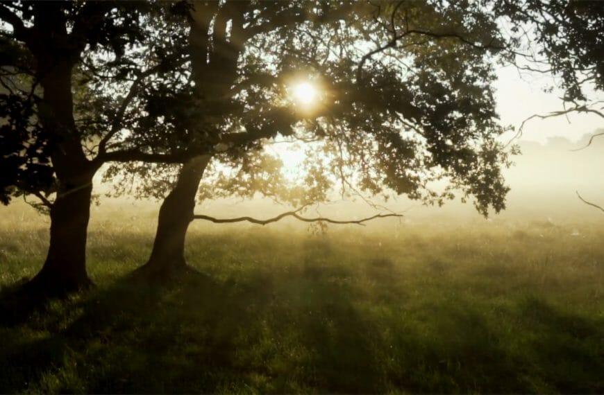 Opti-Mystic – Calm Beginnings and Serenity